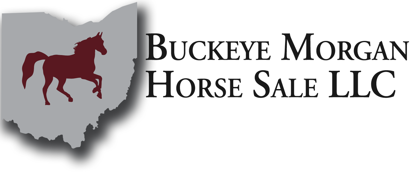 Buckeye Morgan Horse Sale